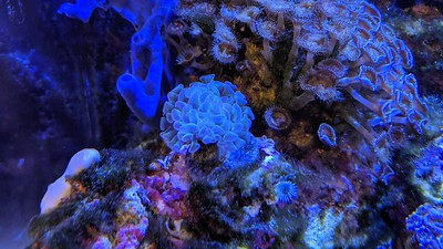 2019-05-30 - Hammer Coral looking white
