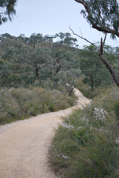 Path from Stringbark picnic area to Trig Point 3.JPG