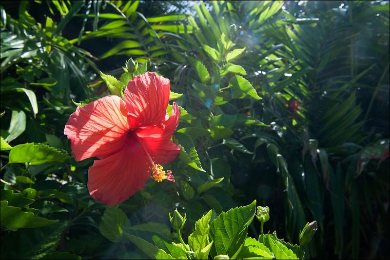 Flower, Anguilla