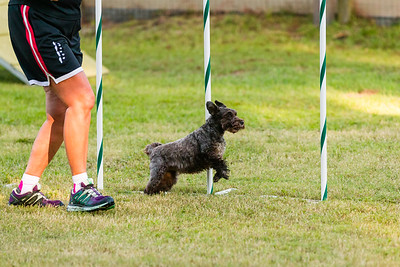 A Way To Play Agility - Oct 2019