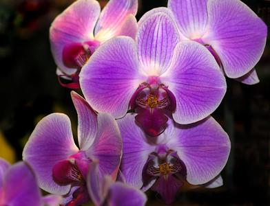 Orchids  Edwards Garden 2007