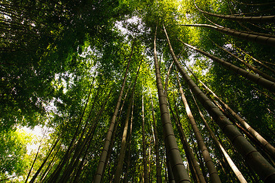 A bamboo forest surrounds the Chokoku-ji temple in Ajiro.