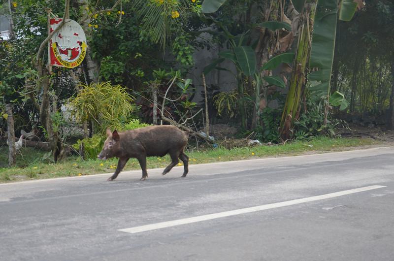 DSC_7022-street-pig.JPG