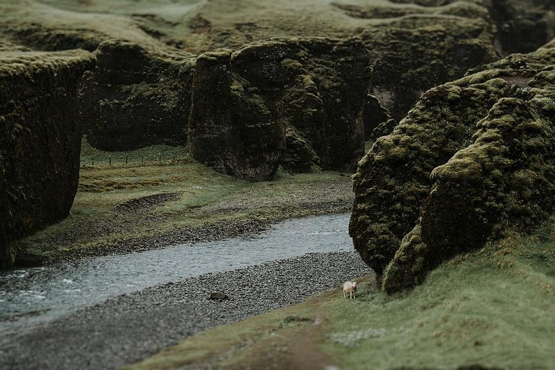 Tu-Nguyen-Destination-Wedding-Photographer-Iceland-Elopement-Fjaðrárgljúfur-16-150a-27a.jpg