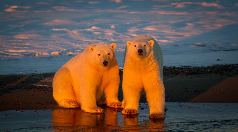 Alaska Polar Bear Photo Workshop-6.jpg