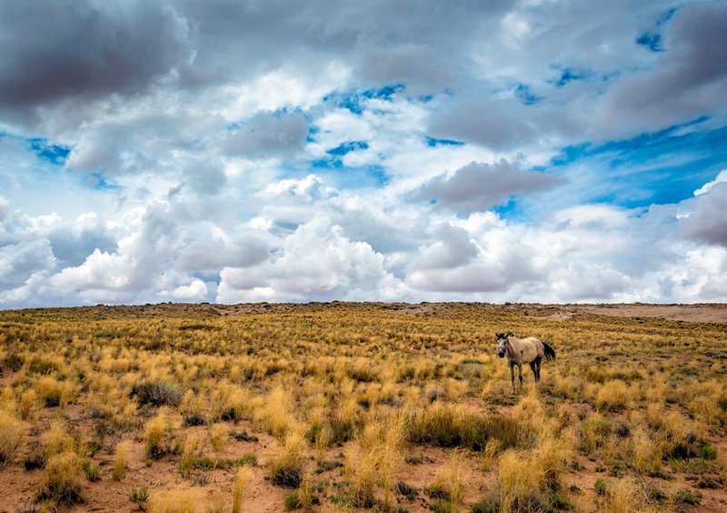 Navajo-reservation-Southwest-Arizona-horse-clouds-landscape-locations-Tony-Marinella.jpg