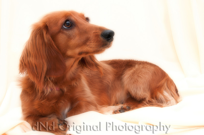 22 Linda's Dog (softfocus).jpg