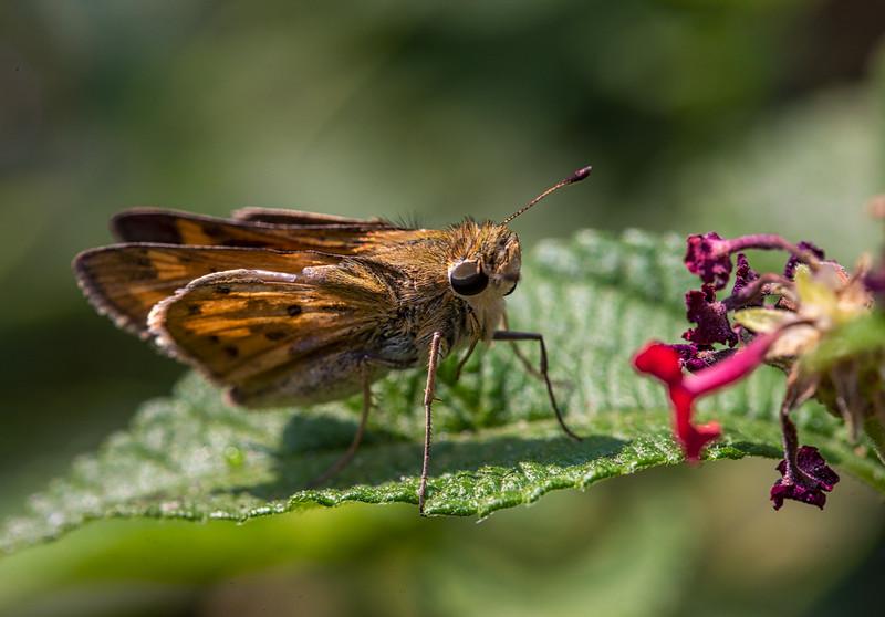 August 29, 2020butterflies-5.jpg