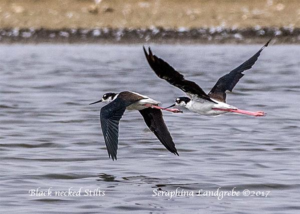 _DSC0640Stilts flying.jpg
