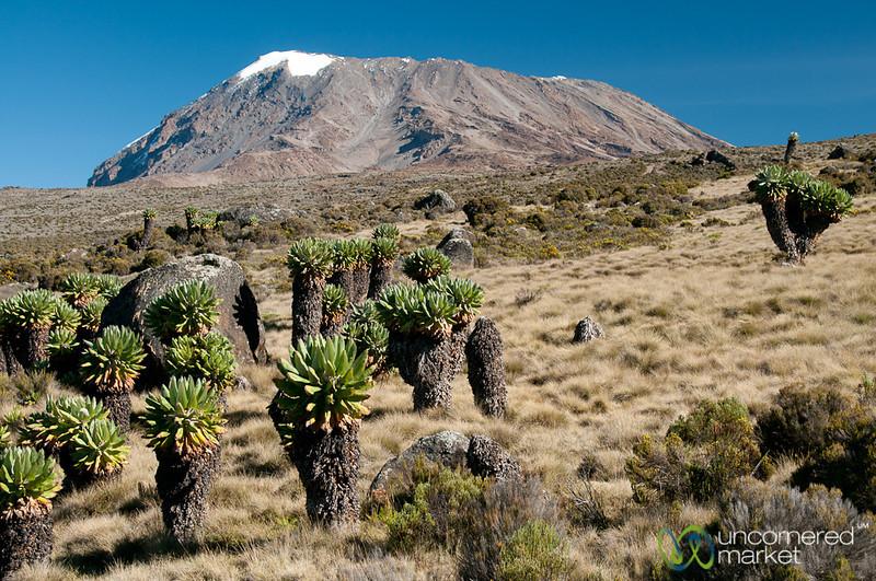 Looking Up at Uhuru Peak - Mt. Kilimanjaro, Tanzania