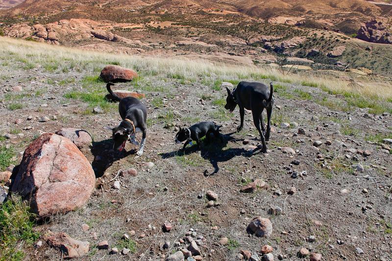 dogs_vasquez_033.jpg