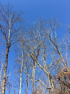 Round Mountain Forest Road walk