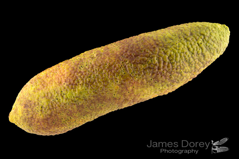 Long green and red Finger Lime 9p 100mm 1-3.jpg