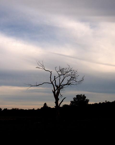 Jennings tree 2.jpg