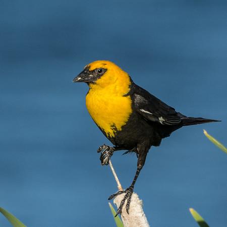 Echo Canyon Reservoir Birds