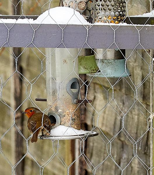 Day 60 - Garden Birds-4350.jpg