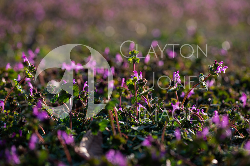 wf_backyard_flowers_7.jpg