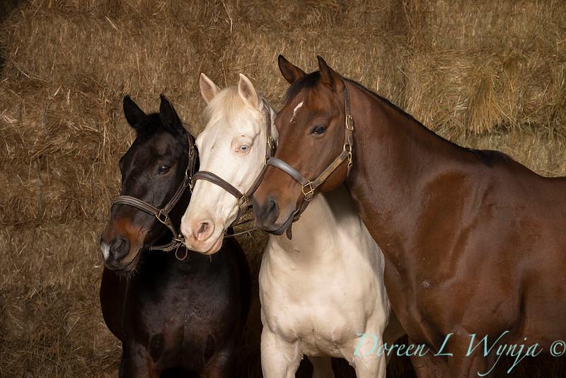 Horse family portrait_133A.jpg