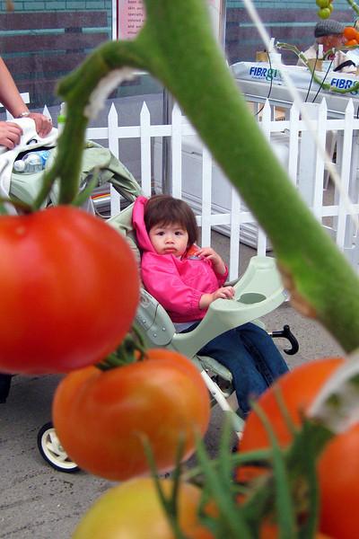 walking through the tomato garden