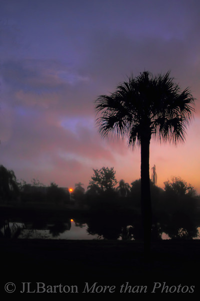 Florida dawn Morning mist highlights the light just before dawn
