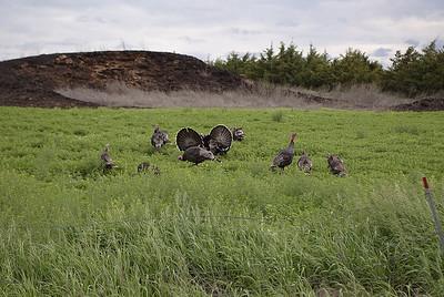 2005 South Dakota Prairie Dogs
