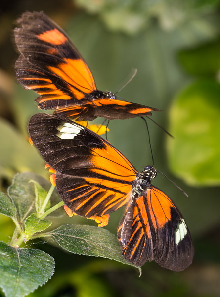 Botanical Gardens 3-6-2017b.jpg
