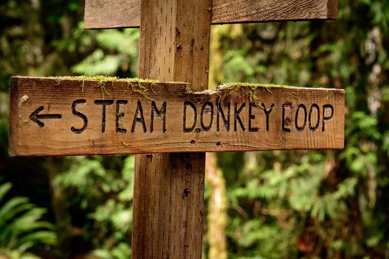 Rainforest Trail - lovely!