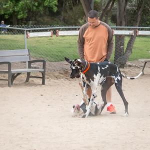 Dog Park, May 26