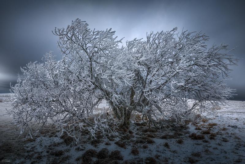 frost-bite.jpg