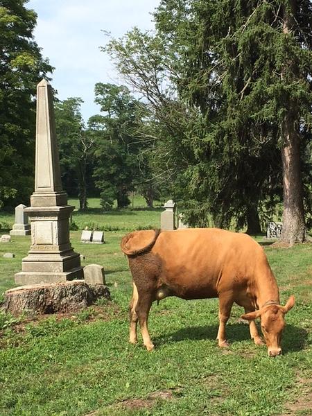 cow cemetery sub.jpg
