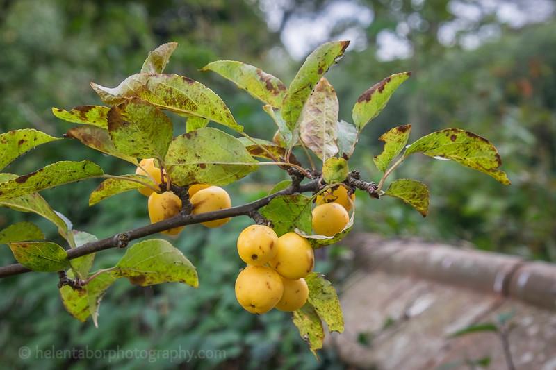 Hob Green autumn-16.jpg