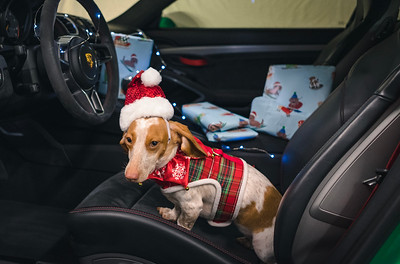 2019-12-25 Christmas Dog