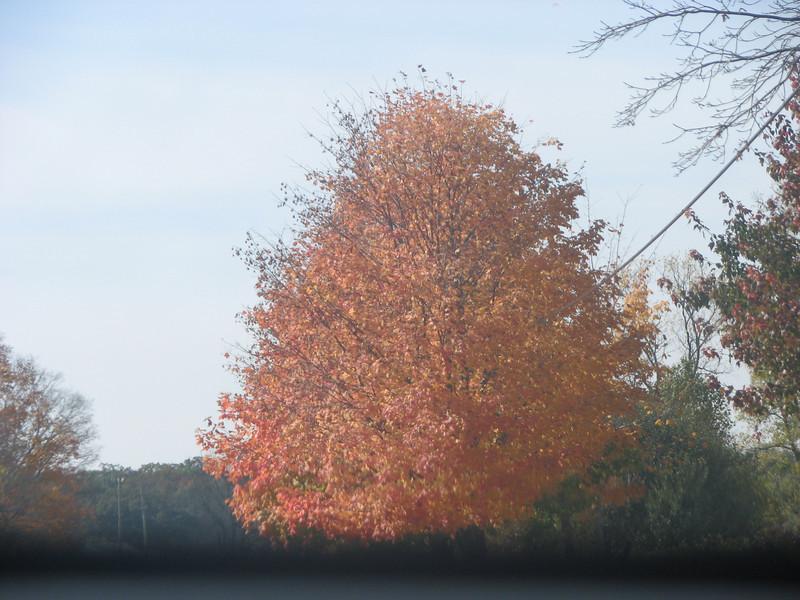 Fall pics 2008 031.jpg