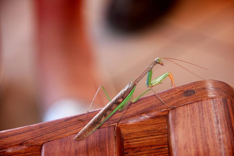 Madagascar, Fauna & Flora 15 Oda.jpg