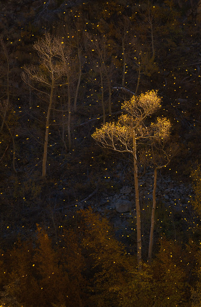 Eastern Sierra, Nolan Nistcke, Bishop Creek, Ancient bristlecone Forest