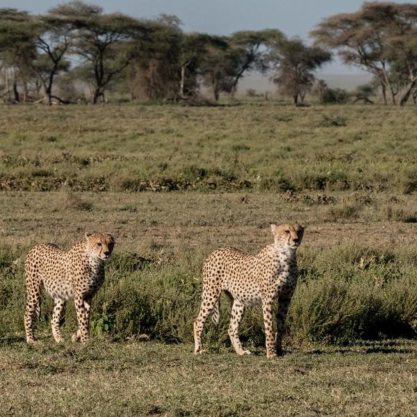 Tanzania_Feb_2018-276.jpg