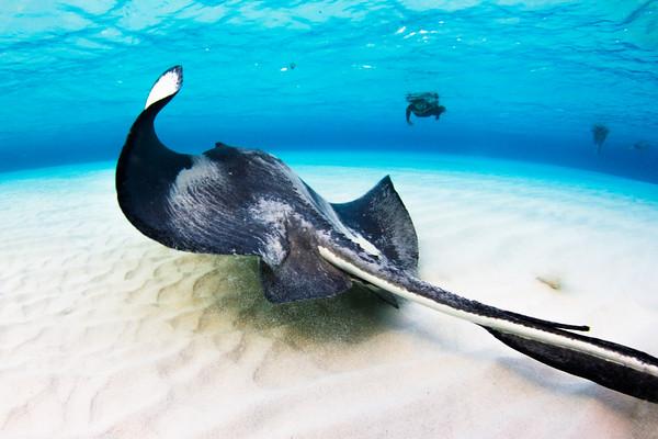 Stingray Sandbar