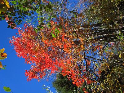 More Leaf Peeping on and around Mt. Sunapee