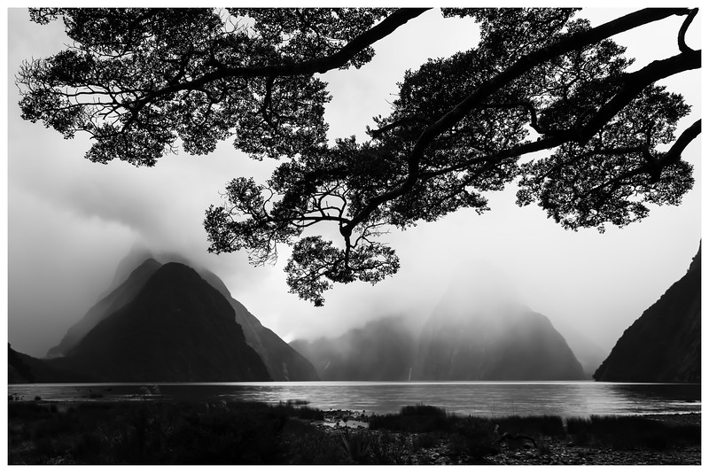 bw-leaves-milford-sound-new-zealand.jpg