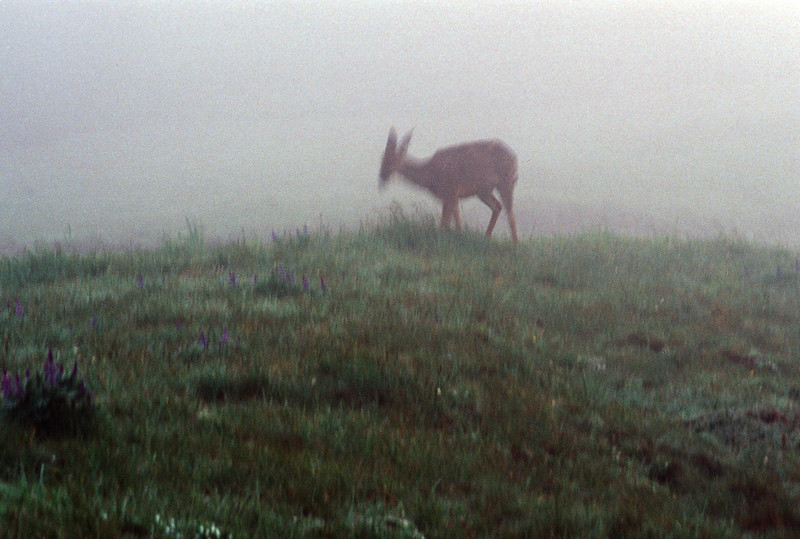 Impressionistic: Deer in the Morning Mist