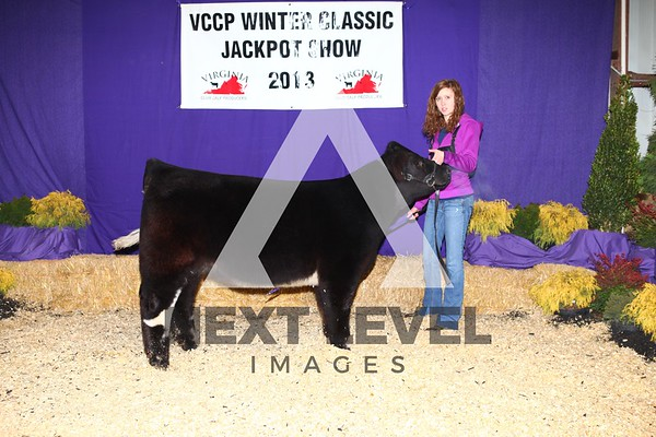 VCCP 2013 Steer Backdrop