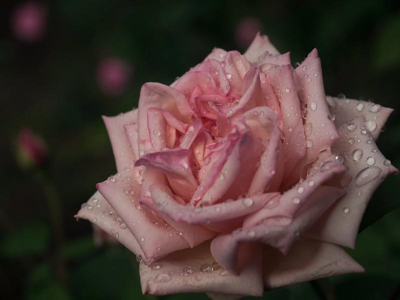 garden_may06-5060046 copy.jpg