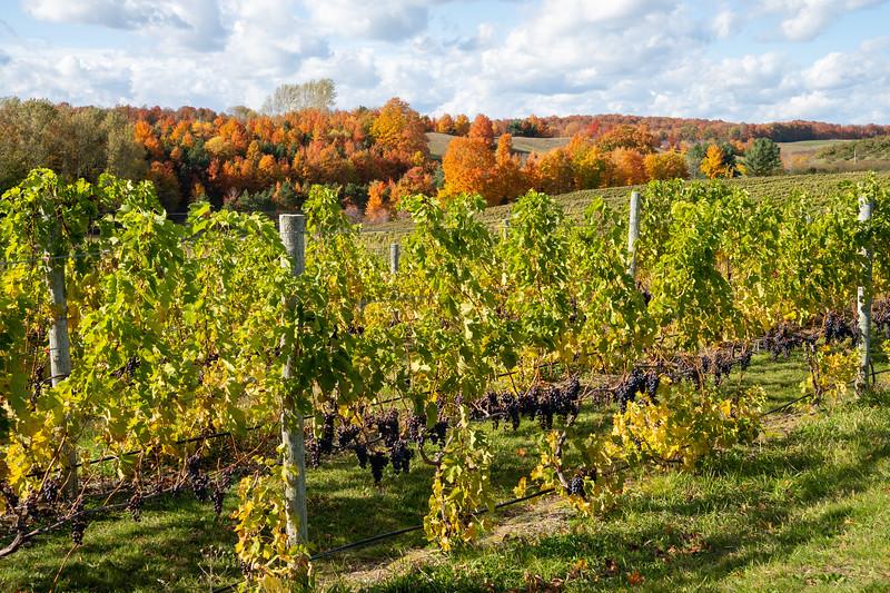 Blustone Vineyards on the Leelanau Peninsula