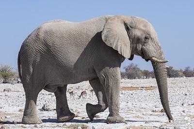 Towering Elephant