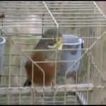 Przemoc wobec ptaków