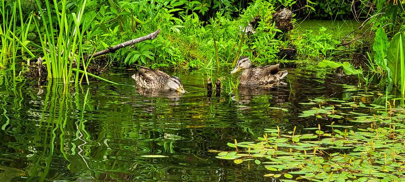 08-05-2021 Beaver Creek Kayak with Dan and Kalli-9.jpg