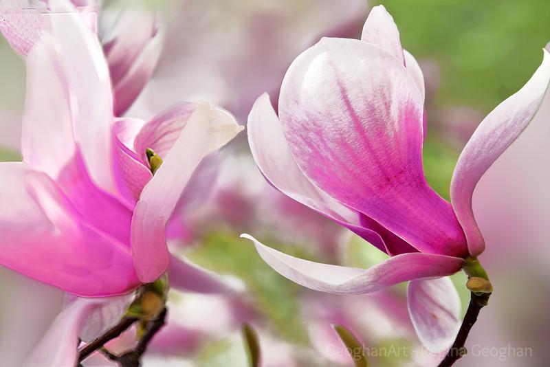 Spring Flower Wind Dance