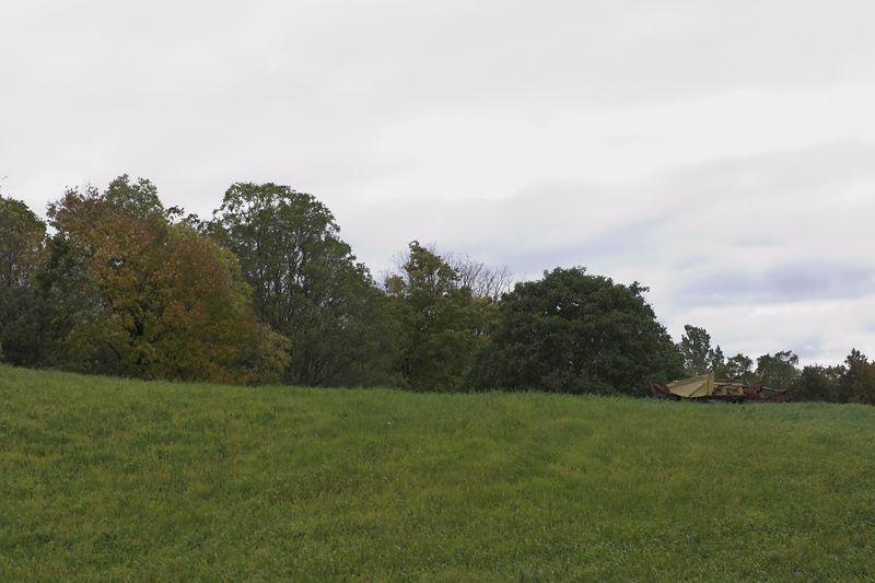 Autumn hillside
