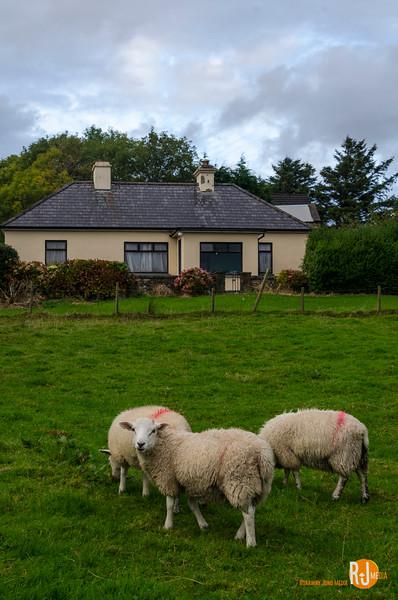 Ireland-mayo-2324.jpg