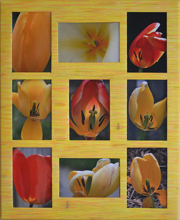 16 Tulips